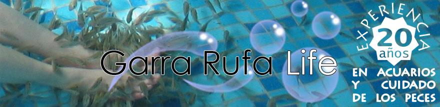 Garra rufa life 20 a os experiencia en cuidados de los peces for Cuidado de peces